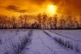 FAR SHE MIS  SK   WS21824D  TREES PLANTED AS WINDBREAK IN WINTERCODETTE                            12/..© WAYNE SHIELS                ALL RIGHTS RESERVEDCODETTE;FARMING;FIELDS;PLAINS;PRAIRIES;RURAL;SASKATCHEWAN;SCENES;SHELTERBELTS;SK_;TREES;WINDBREAKS;WINTER  LONE PINE PHOTO              (306) 683-0889