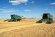TWO JOHN DEERE COMBINES IN FIELD OF MAKWA WHEAT, SASKATOON