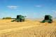 2 JOHN DEERE COMBINES IN FIELD OF MAKWA WHEAT, SASKATOON