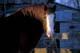 HORSE EATING HAY, ERICKSON