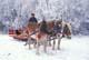 BELGIUM HORSES, MAN AND FROSTY TREES, ST. DENIS