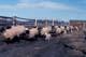 HERD OF SHEEP HEADING TO PASTURE, SASKATOON