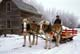 BELGIUM HORSES AND SLEIGH IN WINTER, ST. DENIS