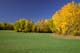 GREEN FIELD AND AUTUMN LEAVES, CARROT RIVER
