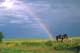 HORSES IN PASTURE, RAINBOW BEHIND, SONNINGDALE