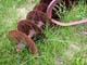 OLD STYLE DISCER IN PRAIRIE GRASS, LANIGAN