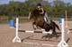 WOMAN ON HORSEBACK JUMPING A FENCE, SASKATOON