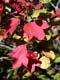 HIGHBUSH CRANBERRIES, GOOD SPIRIT LAKE PROVINCIAL PARK