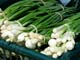 BUNCHES OF GREEN ONIONS, SASKATOON