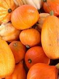 GAR PRO SQU  SK  CWN02D3978D  VTRIPE SQUASH IN A PILESASKATOON                       10/05© CLARENCE W. NORRIS      ALL RIGHTS RESERVEDAUTUMN;BULLETINS;CROPS;FARMERS_MARKET;FARMING;FOOD;GARDEN;PLAINS;PRAIRIES;PRODUCE;SASKATCHEWAN;SASKATOON;SK_;SQUASH;VEGETABLES;VTLLONE PINE PHOTO              (306) 683-0889