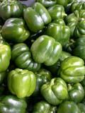 GAR PRO PEP  SK  CWN02D0031D  VT   GREEN PEPPERS SASKATOON FARMER'S MARKETSASKATOON                           07..© CLARENCE W NORRIS           ALL RIGHTS RESERVEDCROPS;FARMERS_MARKET;FARMING;FOOD;GARDEN;GREEN_PEPPERS;PEPPERS;PRODUCE;PLAINS;PRAIRIES;SASKATCHEWAN;SASKATOON;SK_;SUMMER;VEGETABLES ;VTLLONE PINE PHOTO                  (306) 683-0889.
