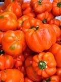GAR PRO PEP  SK  CWN02D0038D  VT ORANGE PEPPERS SASKATOON FARMER'S MARKETSASKATOON                           07..© CLARENCE W NORRIS           ALL RIGHTS RESERVEDBULLETINS;CROPS;FARMERS_MARKET;FARMING;FOOD;GARDEN;ORANGE_PEPPERS;PEPPERS;PLAINS;PRAIRIES;PRODUCE;SASKATCHEWAN;SASKATOON;SK_;SUMMER;VTLLONE PINE PHOTO                  (306) 683-0889.