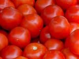 GAR PRO TOM  SK   CWN02T0094D                  RED TOMATOESSASKATOON FARMER'S MARKETSASKATOON                            06..© CLARENCE W. NORRIS           ALL RIGHTS RESERVEDCROPS;FARMERS_MARKET;FARMING;FOOD;FRUIT;GARDEN;PLAINS;PRAIRIES;PRODUCE;RED_TOMATOES;SASKATCHEWAN;SASKATOON;SK_;SUMMER;TOMATOESLONE PINE PHOTO                  (306) 683-0889