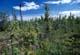 BLACK SPRUCE MEADOW AND MUSKEG, MILE 1118, ALASKA HIGHWAY