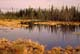 NORTHERN POND IN SPRING, PRINCE ALBERT NATIONAL PARK