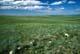 GREEN SUMMER PRAIRIE AND HILLS, CYPRESS HILLS
