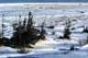 TUNDRA AND HUDSON BAY SHORELINE IN WINTER, CHURCHILL