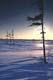 SUN SETTING BEHIND STUNTED SPRUCE ON TUNDRA IN WINTER, DYMOND LAKE