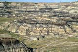 GEO BAD MIS  AB  CWN2206727DVIEW OF HORSESHOE CANYON IN SUMMER DRUMHELLER                       08..© CLARENCE W. NORRIS      ALL RIGHTS RESERVEDAB_;ALBERTA;BADLANDS;DRUMHELLER;EROSION;GEOGRAPHY;HORSESHOE_CANYON;PLAINS;PRAIRIES;SCENES;SUMMER LONE PINE PHOTO              (306) 683-0889