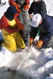 IND FIS MIS  AB  DSR1001240D  VT MEN PULLING GILL NET IN WINTERLAC STE. ANNE                    03/..© DUANE S. RADFORD         ALL RIGHTS RESERVEDAB_;ALBERTA;COMMERCIAL_FISHING;FISHING;ICE;ICE_FISHING;INDUSTRY;LAC_STE_ANNE;MALE;NETS;OCCUPATIONS;OUTDOORS;PEOPLE;VTL;WINTERLONE PINE PHOTO              (306) 683-0889