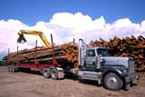 IND FOR MIS  SK     1910515D       CRANE UNLOADING LOGS AT SAWMILL GLASLYN                            08/..   © CLARENCE W. NORRIS     ALL RIGHTS RESERVEDAUTOS;CRANES;EQUIPMENT;FORESTRY;INDUSTRY;GLASLYN;LOGS;PARKLAND;PLAINS;PRAIRIES;SASKATCHEWAN;SK_;SUMMER;TRANSPORTATION;TRUCKING;WOODLONE PINE PHOTO                  (306) 683-0889