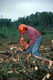 IND FOR MIS  SK     1910911D    NMR  VT         MAN USING CHAINSAW TO TRIM TREE DORINTOSH                                    08/..   © CLARENCE W. NORRIS                  ALL RIGHTS RESERVEDADULTS;CHAINSAWS;DORINTOSH;EQUIPMENT;FORESTRY;HARD_HATS;HARVEST;INDUSTRY;LOGGING;LUMBERJACKS;MALE;OCCUPATIONS;PARKLAND;PEOPLE;SAFETY;SASKATCHEWAN;SK_;TREES;VTLLONE PINE PHOTO                  (306) 683-0889