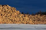 IND FOR MIS  SK   WS21536DLOGS PILED IN WINTER, WEYERHAEUSER SAWMILLCARROT RIVER                     0215© WAYNE SHIELS                 ALL RIGHTS RESERVEDCARROT_RIVER;FORESTRY;INDUSTRY;LOGGING;LOGS;MILLS;PARKLAND;SASKATCHEWAN;SK_;SNOW;WEYERHAEUSER;WINTER;WOODLONE PINE PHOTO              (306) 683-0889
