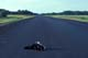 DEAD SKUNK IN THE MIDDLE OF ROAD, HUDSON BAY