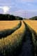 TRANSMISSION LINES AND TRAIL THROUGH WHEAT, PRUD'HOMME