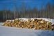ASPEN CORDWOOD PILED IN WINTER, AGASSIZ PROVINCIAL FOREST
