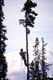 LOGGER TOPPING TREE, WHITEHORSE