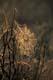 BACKLIT SPIDERWEB, RIDING MOUNTAIN NATONAL PARK