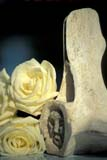 ART SCU MIS  ON  BMM1000401D  VTWHALE BONE SCULPTURE AND LABRADOR ROSEONTARIO                                      ..© BEV MCMULLEN                          ALL RIGHTS RESERVEDABORIGINAL;ART;BONES;BULLETINS;CENTRAL;FLOWERS;LABRADOR_ROSE;ON_;ONTARIO;ROSES;SCULPTURES;SUMMER;VTL;WHALESLONE PINE PHOTO              (306) 683-0889
