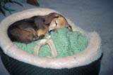 OCC BED BRE  SK     1909015D  MRDOG SLEEPING IN BASKET         TERRACE BANK BED AND BREAKFASTLUMSDEN                            07                   © CLARENCE W. NORRIS      ALL RIGHTS RESERVEDACCOMODATIONS;ANIMALS;BED_AND_BREAKFAST;DOGS;LUMSDEN;OCCUPATIONS;PETS;PLAINS;PRAIRIES;SASKATCHEWAN;SK_;SUMMER;TERRACE_BANK_B_AND_B;TOURISMLONE PINE PHOTO              (306) 683-0889