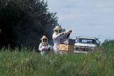OCC BEE KEE  MB     1807307D  MR#307MAN AND YOUNG DAUGHTER TENDING BEEHIVESLA RIVIERE                           07                   © CLARENCE W. NORRIS      ALL RIGHTS RESERVEDBEEKEEPING;BEES;CHILDREN;CROPS;FARMING;FOOD;GIRL;HONEY;LA_RIVIERE;MALE;MANITOBA;MB_;MR_;OCCUPATIONS;PEOPLE;PLAINS;PRAIRIES;RURAL;SAFETY;SUMMERLONE PINE PHOTO              (306) 683-0889