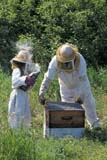 OCC BEE KEE  MB     1807319D  VT  MR#307MAN AND YOUNG DAUGHTER TENDING BEEHIVESLA RIVIERE                           07                   © CLARENCE W. NORRIS      ALL RIGHTS RESERVEDBEEKEEPING;BEES;CHILDREN;CROPS;FARMING;FOOD;GIRL;HONEY;LA_RIVIERE;MALE;MANITOBA;MB_;MR_;OCCUPATIONS;PEOPLE;PLAINS;PRAIRIES;RURAL;SAFETY;SUMMER;TEAMWORK;VTLLONE PINE PHOTO              (306) 683-0889