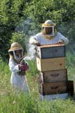 OCC BEE KEE  MB     1807313D  VT  MR#307MAN AND YOUNG DAUGHTER TENDING BEEHIVESLA RIVIERE                           07                   © CLARENCE W. NORRIS      ALL RIGHTS RESERVEDBEEKEEPING;BEES;CHILDREN;CROPS;FARMING;FOOD;GIRL;HONEY;LA_RIVIERE;MALE;MANITOBA;MB_;MR_;OCCUPATIONS;PEOPLE;PLAINS;PRAIRIES;RURAL;SAFETY;SUMMER;TEAMWORK;VTLLONE PINE PHOTO              (306) 683-0889