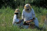 OCC BEE KEE  MB     1807405D  MR#307MAN AND YOUNG GIRL TENDING BEEHIVESLA RIVIERE                           07                   © CLARENCE W. NORRIS      ALL RIGHTS RESERVEDBEEKEEPING;BEES;CHILDREN;CROPS;FARMING;FOOD;GIRL;HONEY;LA_RIVIERE;MALE;MANITOBA;MB_;MR_;OCCUPATIONS;PEOPLE;PLAINS;PRAIRIES;RURAL;SAFETY;SUMMER;TEAMWORKLONE PINE PHOTO              (306) 683-0889
