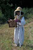 OCC BEE KEE  MB     1807411D  VT  MR#307YOUNG GIRL HOLDING BEEHIVELA RIVIERE                           07                   © CLARENCE W. NORRIS      ALL RIGHTS RESERVEDBEEKEEPING;BEES;CHILDREN;CROPS;FARMING;FOOD;GIRL;HONEY;LA_RIVIERE;MANITOBA;MB_;MR_;OCCUPATIONS;PEOPLE;PLAINS;PRAIRIES;RURAL;SAFETY;SUMMER;VTLLONE PINE PHOTO              (306) 683-0889