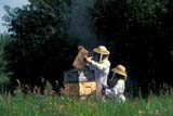 OCC BEE KEE  MB   WS21311DBEEKEEPER AND DAUGHTER EXTRACTING HONEY FROM HIVESLA RIVIERE                           07                   © WAYNE SHIELS                 ALL RIGHTS RESERVEDBEEKEEPING;BEES;CHILDREN;CROPS;FARMING;HONEY;INSECTS;LA_RIVIERE;MALE;MANITOBA;MB_;OCCUPATIONS;PEOPLE;PLAINS;PRAIRIES;RURAL;SAFETY;SUMMER;TEAMWORKLONE PINE PHOTO              (306) 683-0889