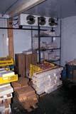 OCC BUT MIS  SK     1400213AD  VT WALK-IN COOLERSASKATOON                       01                  © CLARENCE W. NORRIS      ALL RIGHTS RESERVEDBUTCHERS;COOLERS;FOOD;INDUSTRY;MEAT;OCCUPATIONS;PEOPLE;PLAINS;PRAIRIES;SASKATCHEWAN;SASKATOON;VTL;WINTERLONE PINE PHOTO              (306) 683-0889