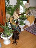 OCC CAR HOM  SK  CWN02T0314D  VTPLANTS IN LIVING ROOMHEART'S HAVEN, VICTORIAN PERSONAL CARE HOMELUMSDEN                                 05..© CLARENCE W. NORRIS           ALL RIGHTS RESERVEDCARE_HOME;HOMES;LUMSDEN;OCCUPATIONS;PLAINS;PLANTS;PRAIRIES;SASKATCHEWAN;SK_;VICTORIAN;VTLLONE PINE PHOTO                  (306) 683-0889