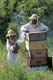 MAN & YOUNG DAUGHTER TENDING BEEHIVES, LA RIVIERE