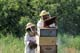 MAN AND YOUNG DAUGHTER TENDING BEEHIVES, LA RIVIERE