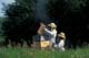 BEEKEEPER AND DAUGHTER EXTRACTING HONEY FROM HIVES, LA RIVIERE