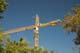 CONSTRUCTION CRANE FRAMED BY TREES, SASKATOON