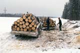 OCC WOO CUT  SK     1400301DHAULING CUT WOOD FROM FOREST IN WINTERGLASLYN                            01                 © CLARENCE W. NORRIS      ALL RIGHTS RESERVEDAUTOS;BOREAL;FORESTRY;GLASLYN;LOGS;INDUSTRY;OCCUPATIONS;OUTDOORS;PARKLAND;PLAINS;PRAIRIES;SASKATCHEWAN;SK_;TRANSPORTATION;WINTER;WOOD;WOOD_CUTTERSLONE PINE PHOTO              (306) 683-0889