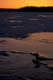 DAWN LIGHT ON ICE, WEKUSKO LAKE, SNOW LAKE