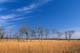 CLOUDS, ASPENS AND BIG BLUESTEM GRASS, TALL GRASS PRAIRIE PRESERVE