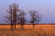 BIG BLUESTEM AND BURR OAK, TALL GRASS PRAIRIE PRESERVE